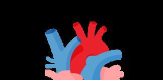 tim hoạt động như thế nào