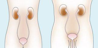 bàng quang và hệ nội tiết