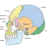 Hình ảnh xương sọ nhìn từ phía bên