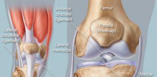 Hình ảnh giải phẫu khớp gối